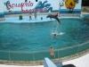 aquario_bacanoa